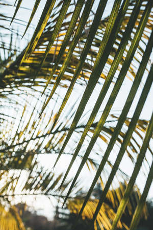 Close-up of palm leaves on a background of the sky. Standard-Bild
