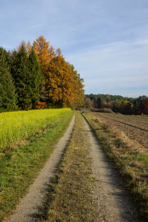 edge: Path on meadow, field and forest edge Stock Photo