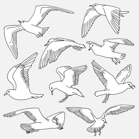 Hand drawn isolated illustration of seagulls Illustration