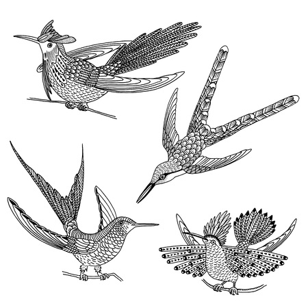 Hand drawn humming birds in black and white Illustration
