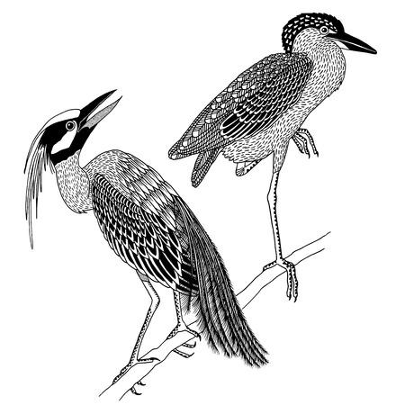 Male and female heron, hand drawn black and white ink illustration Illusztráció