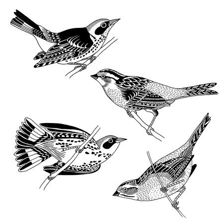 손으로 그린 참새와 까마귀, 흑백 잉크 그림