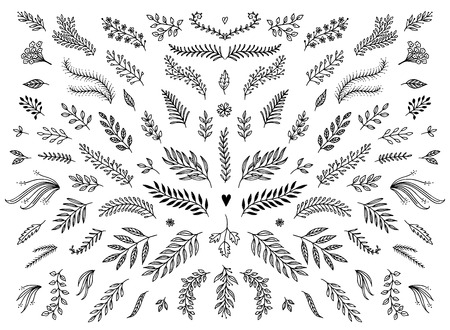 Hand sketched floral design elements, flowers and leaves for text decoration. Çizim