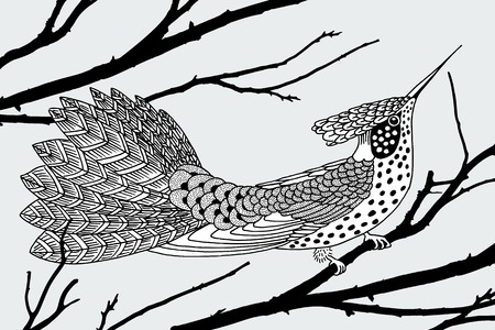 Ink drawing of a hummingbird Illustration