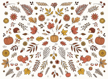 Hand drawn floral elements for autumn  fall - seasonal leaves, flowers and plants for text decoration