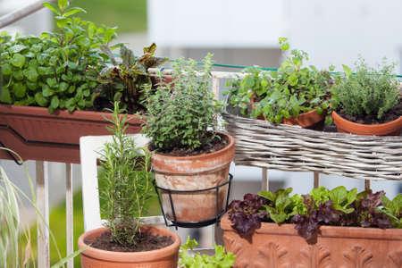 La plantación de hierbas y vegetales en el balcón Foto de archivo - 60322571