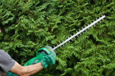 hedge: Trimming a hedge