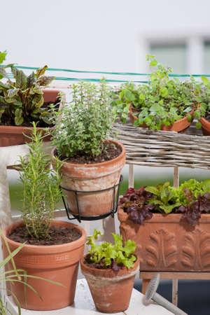 urban gardening: Urban gardening Stock Photo
