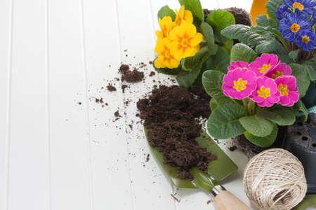 frhling: Primeln und Gartenwerkzeug Stock Photo