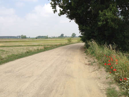 albero: Passeggiata in campagna