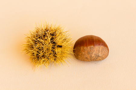 the chestnut husk becomes maturing from green to dark brown and contains the chestnut