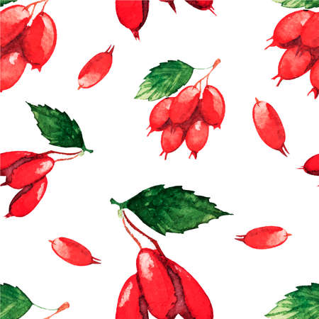seamless pattern with fruits of dogwood on white background