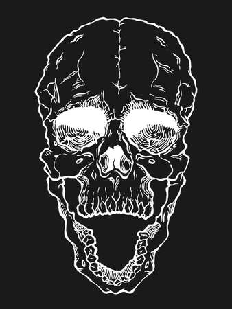 cranial skeleton: Terrible frightening skull. Creepy illlustration for halloween