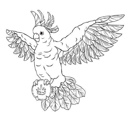 eye patch: Pirate parrot in flight with outstretched wings, eye patch and a card or letter in his paws