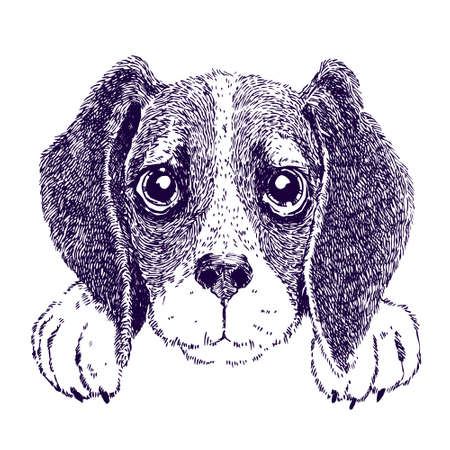 Funny beagle. Sketch vector illustration of puppy Illustration