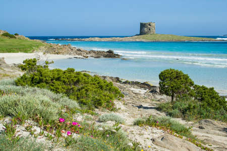 serf: Italy  Sardinia  Stintino seascape