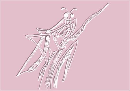 mantis: illustration of mantis Illustration