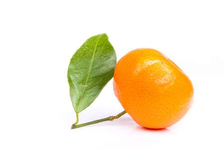 Tangerine on a white background Stock Photo - 6223950