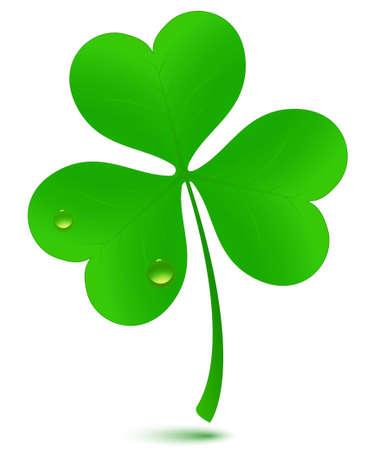 three leafed clover: St. Patricks day symbol. Illustration