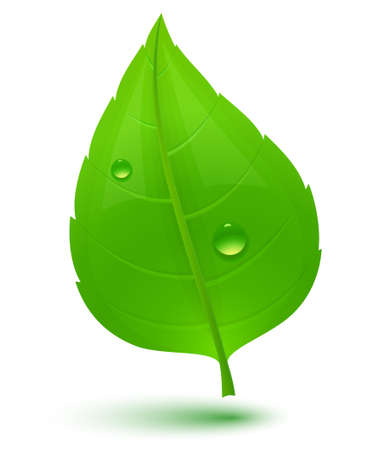 drop shadow: Green leaf with drops of water. Eco Concept.