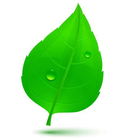 leaf water drop: Spring green leaf with drops of water. Vector illustration Illustration