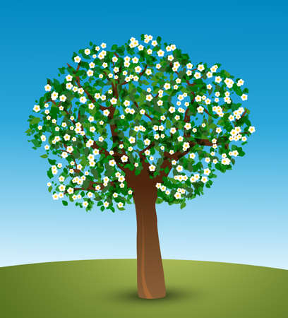 tree bark: Spring tree  Vector illustration of tree with green leaves and white flowers