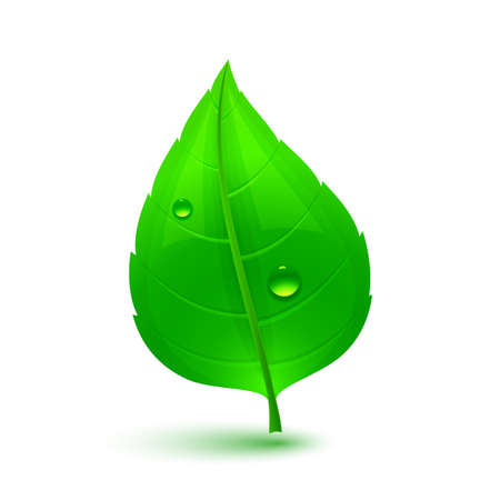 wet leaf: Green leaf with drops of water. Eco Concept. Vector illustration.