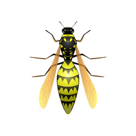Wasp vector illustration Illusztráció