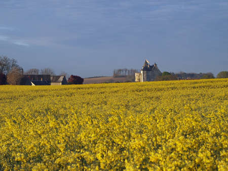 Motte castle at sunrise behind a rapeseed field in spring, Usseau ,  France