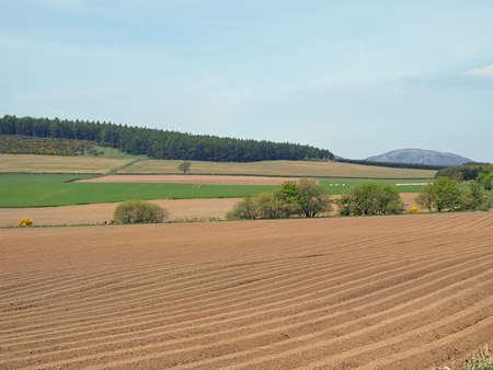 Potatoe field and pasture east Scotland west of Edzell.