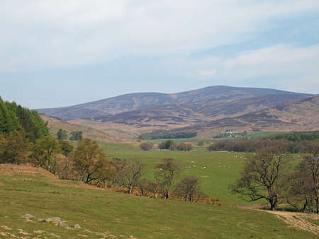 Pasture, river and trees, Glenesk valley in may Scotland Stock Photo - 13819265