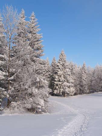 Trilha na neve levando a uma floresta congelada Banco de Imagens