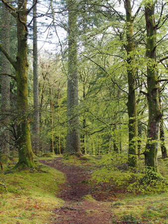 forest path, Scotland in may       Stock Photo