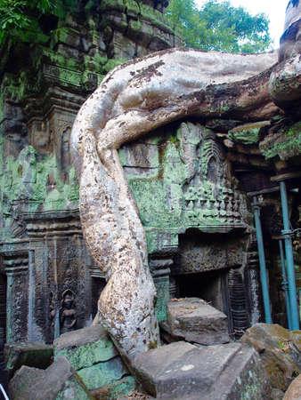 Ta Prohm Ruins temple