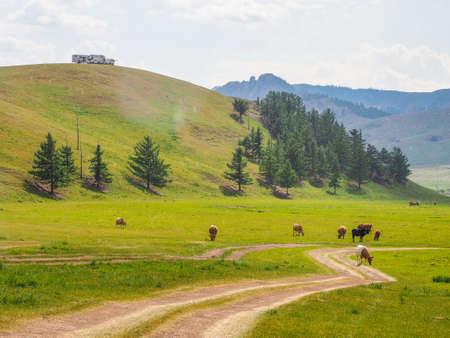 Landscapes, Yurts and horses in Gorkhi-Terelj National Park, Mongolia