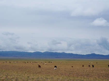 Mongolia landscape is filled with open plains, mountain rangers and deserts. Across the landscape Nomad Herders take there livestock for grazing.