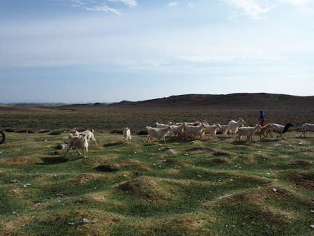 Nomad herders are a way of life in rural Mongolia. Here a herder after taking his goats out to graze is now getting them a drink of water.