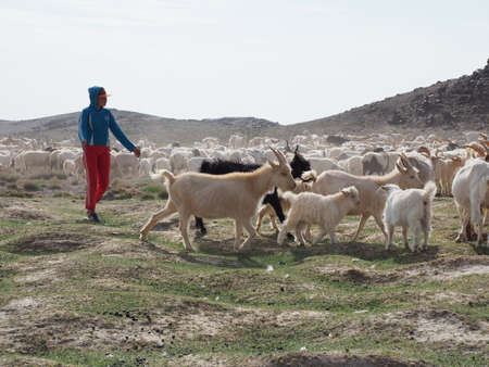 Nomad herders are a way of life in rural Mongolia. Here a herder after taking his goats out to graze is now getting them a drink of water. Stock fotó