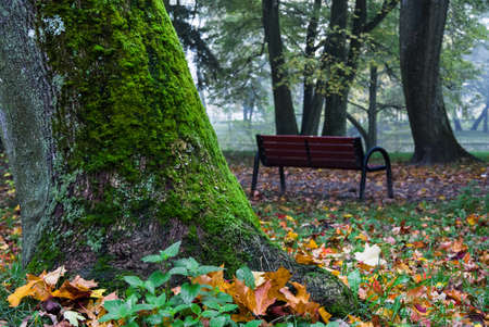 Park Bench with Autumn Leaves Stockfoto - 134894775