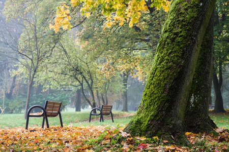 Park Bench with Autumn Leaves Stockfoto