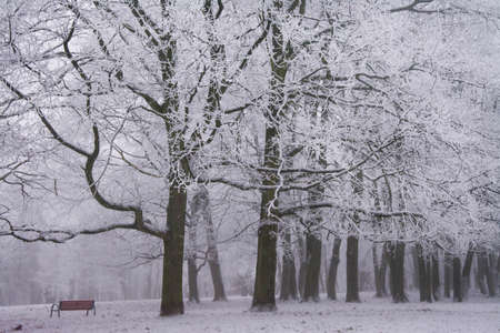 park bench in the winter Stockfoto - 134894781