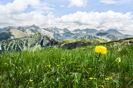 beautiful flowers on the meadow, Tatra Mountains in Poland