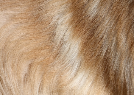 Close-up high definition image of textured dog hair