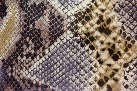 Textures snakeskin Stock Photo - 16451348