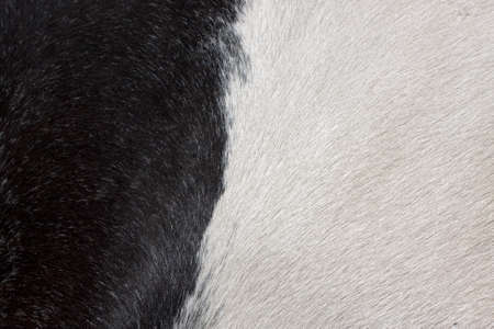 Texture of black and white fur Stock Photo