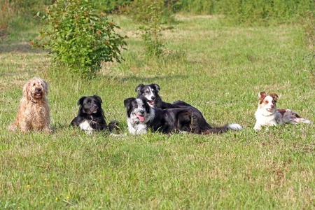 Five mixed breed dogs