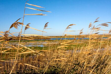 Scenic view of Oare marshes in Kent, England