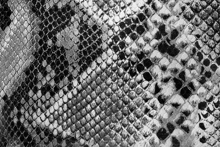Black and white, closeup on snakeskin, textured snakeskin photo