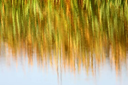 Reed bed reflections photo