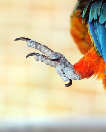 talons: Talons of a parrot bird